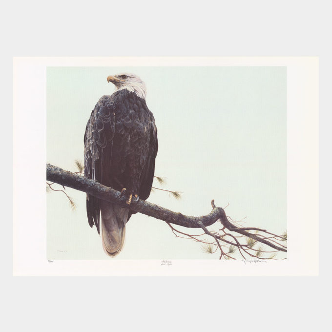 """Solitude"" Bald Eagle"