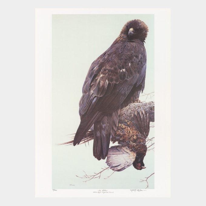 """Victor"" Golden Eagle – Ringed Neck Pheasant"